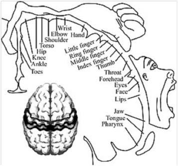 Mappa cortecci