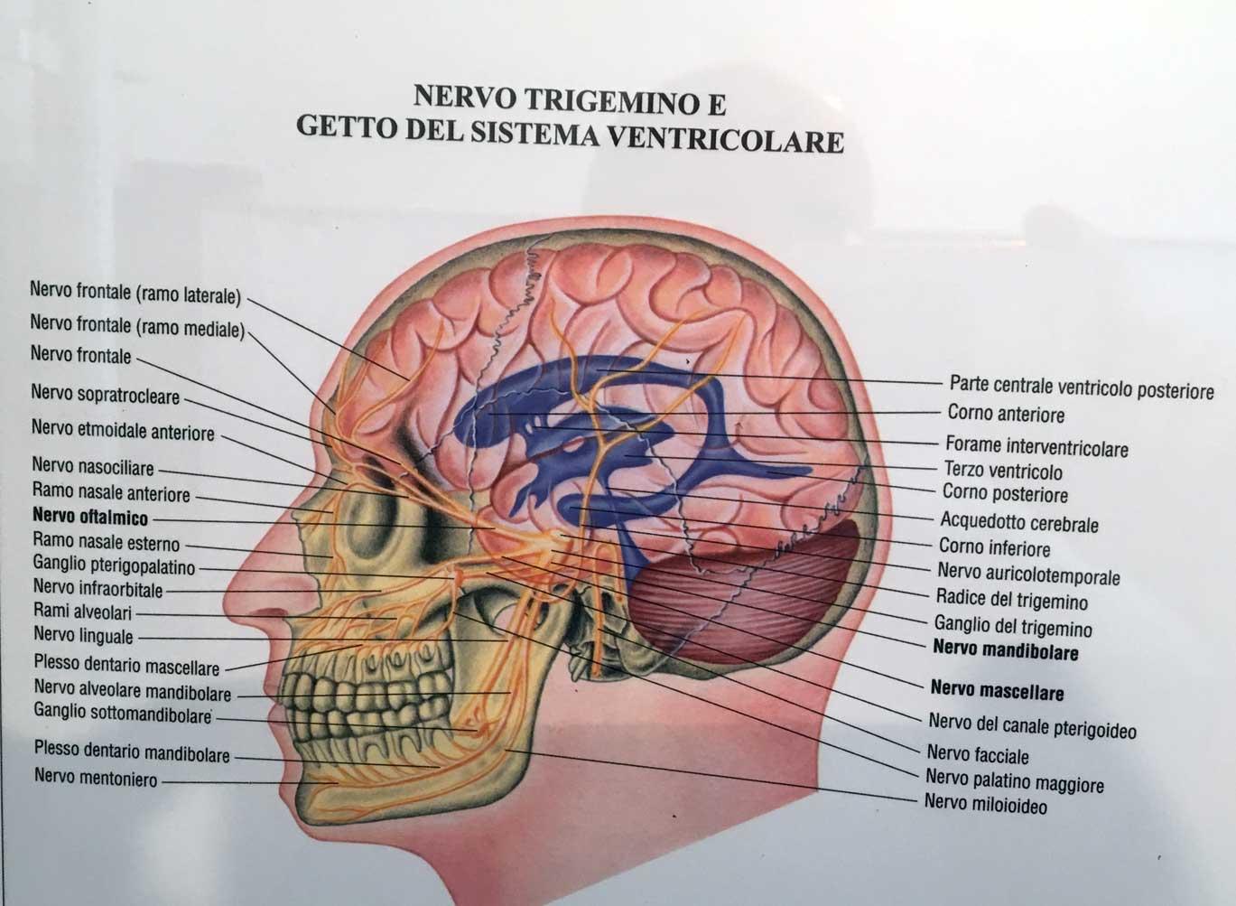 Nevralgia del trigemino chiropratica